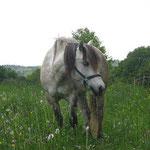 Kilnacasan Ribhan (*24.05.2003) Ruraidh of Tormore X Lyncrest`s Rosalie