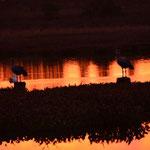 Sonnenuntergang in den Themen von Nicanor