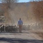 gesehen in San Pedro de Atacama, erinnert mich irgendwie an einen Westernfilm