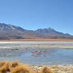 jede Menge schöne Lagunen und tolle Fotomotive