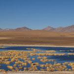 Traumhafte Landschaft auf über 4000m auf dem Weg zum Geysir El Tatio