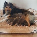 Mama Emely mit ihren Welpen 14 Tage alt 🐕🐕🐕🐕🐕🐾🐾