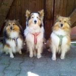 🐾🐾Sissi Steuerwalds Mädels .🐾🐾 Kerry, Bella und Luna❤❤❤🐾🐾