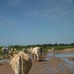 op weg naar Mariamakunda