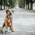 Hond van bruidspaar wacht met trouwboeket op de bruid