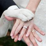 Bruidspaarhanden samen met hondenpoot op de foto