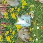 Konijnen, zwanen, rivieren, bloemen