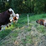 ...sie findet die Kameraden aufgrund einiger doofer Erfahrungen mit deren Zaun eher gruselig :)