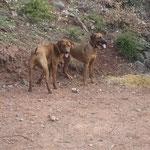 Bomani und Nala