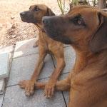 Nala und Zwillingsbruder Banga