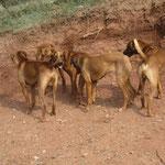 Nala inmitten ihrer Brüder :)