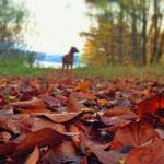 Schöner bunter Herbst