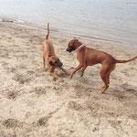 Holly und Nala