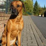 """""""Hundsmüde"""" auf Kumpel Bruno warten"""