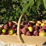 Quelques fruits du verger