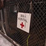 Bild 21-415 - Hundespital