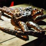 Bild 19-374 - Die Riesenkrabbe - auch Königskrabbe genannt - kann eine Größe von 25 cm erreichen und ein Gewicht von 10 Kilogramm
