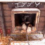 Bild 21-413 - Hundezimmer