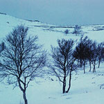 Bild 22-434 - Wo sonst keine Bäume wachsen