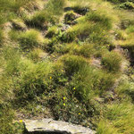 Steinplatte für das Miesch, Perren Vik
