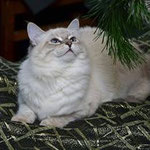Айсия Чары Невы