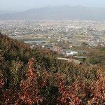 柿山から平野を臨む。
