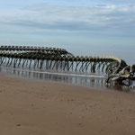 Le serpent d'océan - 1 heure à pieds