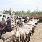 Marché de Kachgar