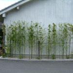 店駐車場から黒竹