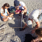 Measuring the depth of the nest, the diameter and top of the eggs(depth from surface of the beach to the first eggs)