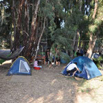 Tents, hammocks, chairs and a table as  well as clothes lines are build up below the eucalyptus trees