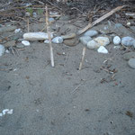 Nest mit Steinmarkierung am Strand von Yaniklar