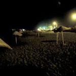 Lichter der Promenade können nachts adulte wie frisch geschlüpfte Schildkröten irritieren