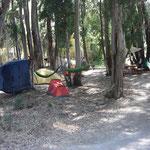 Zelte unter den schattenspendenden Eukalyptusbäumen