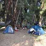 Hängematten, Sessel, Tische Wäscheleinen und Zelte sind direkt unter den Eukalyptusbäumen aufgebaut