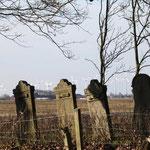 Foto: Holger Lauf    /  Judenfriedhof