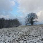"""Der einzelne Baum ist das """"Markenzeichen"""" der Dorfstelle Mauthaus: Früher war es die Wirtslinde, die um 1955 gefällt wurde."""