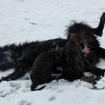 Nuckeln im Schnee