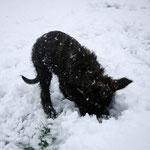 Was ist da unter dem Schnee?