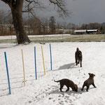 So viele Spuren im Schnee