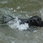Das nennt man Schwimmen