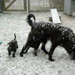 Im Schneegestöber