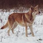 Carpatte Chalet aux Loups