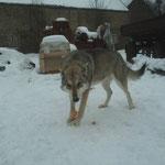 Anouk Wolf's Spirit