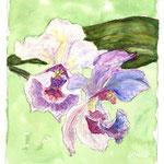 """""""Orchideen"""""""