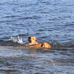 Lotta macht ihren Freischwimmer!