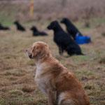 ....und warten konnte alle Hunde sehr gut!