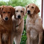 ...die Drei von der Treppe :-))