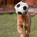 Nur Fußball im Kopf???