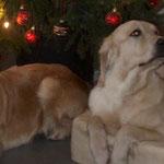 Unser Weihnachtsbild...goldenes Weihnachten ;-)